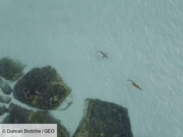Australia filmed shark chase