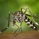 SLA calls for vigilance against the tiger mosquito in Lyon and its region
