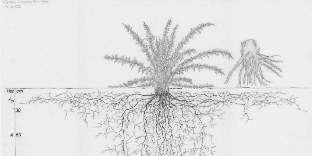 Atlas of Root Systems Saved from Limbo and available online
