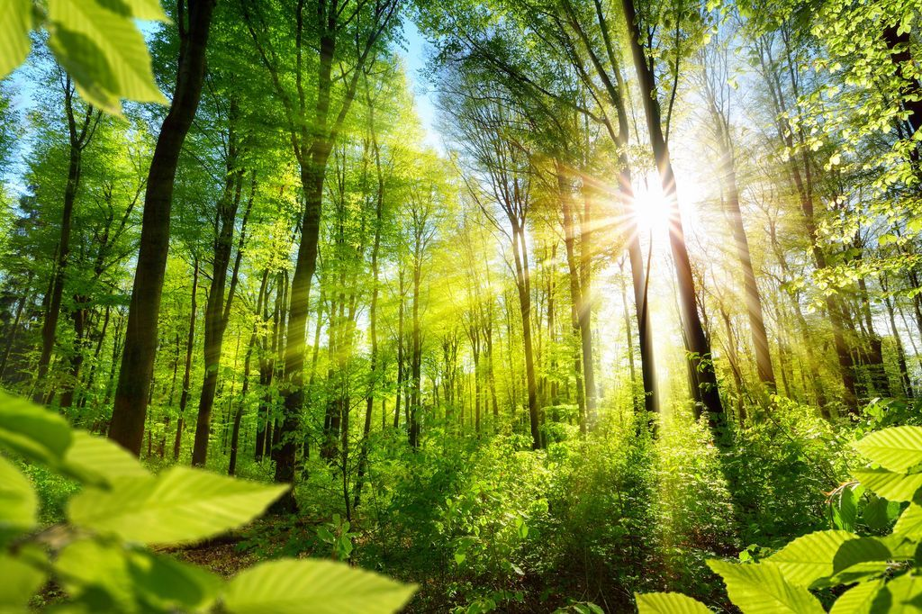 Mushrooms helped plants to invade Earth  Science |  News |  the sun