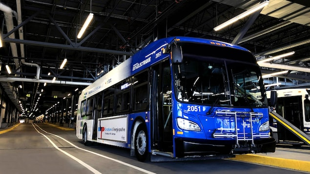 STL electric buses will be in service this summer