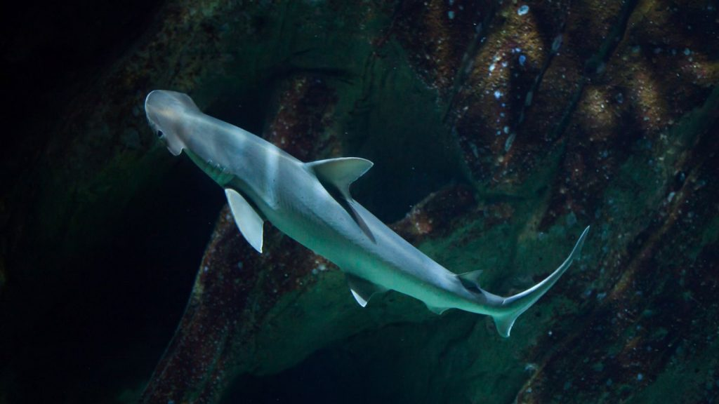 The study found that sharks use the Earth's magnetic field like the Global Positioning System