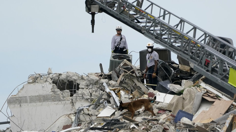 Two rescuers dig among the rubble with a dog.