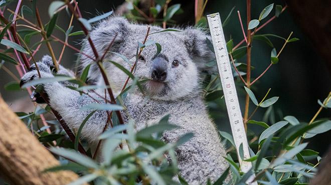 "Australia: Researchers test the ""facial recognition"" of colas"