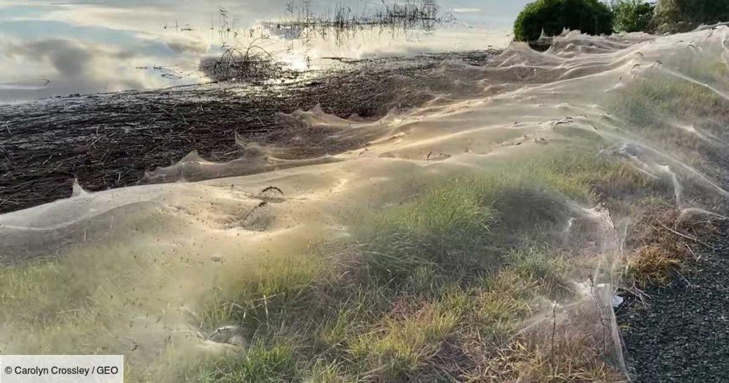 Huge spider webs invade Australian territory after floods