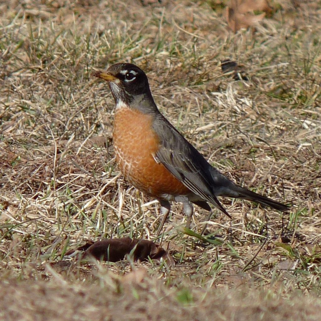 Why have you never seen birds eating worms on the sidewalk?     science    news    the sun