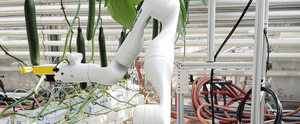 Robots could soon harvest greenhouse vegetables