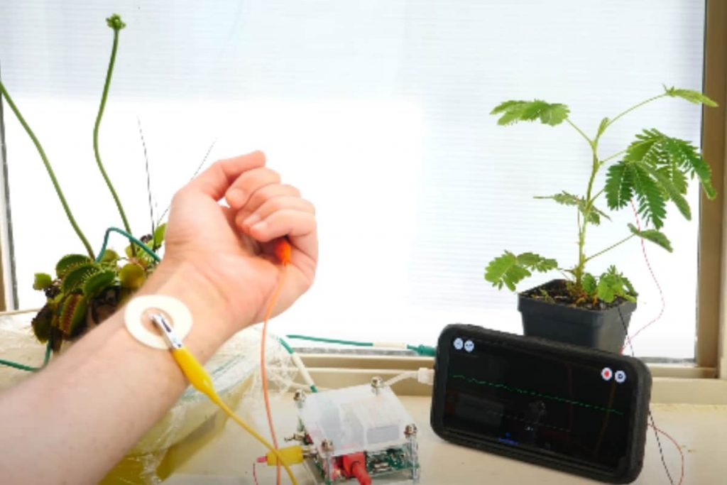 Science YouTuber uses the brain to communicate with the plant and make it sleep