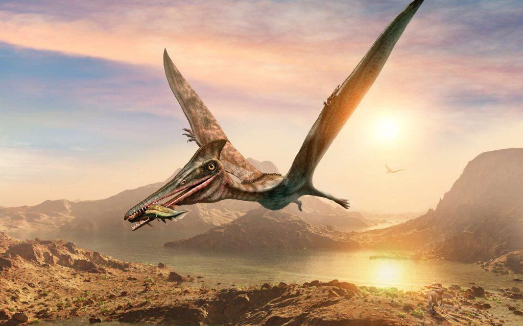 Vue d'artiste d'un ptérosaure en vol avec sa proie. © warpaintcobra, Adobe Stock