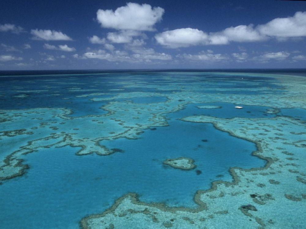Here is the largest coral reef in the Great Barrier Reef