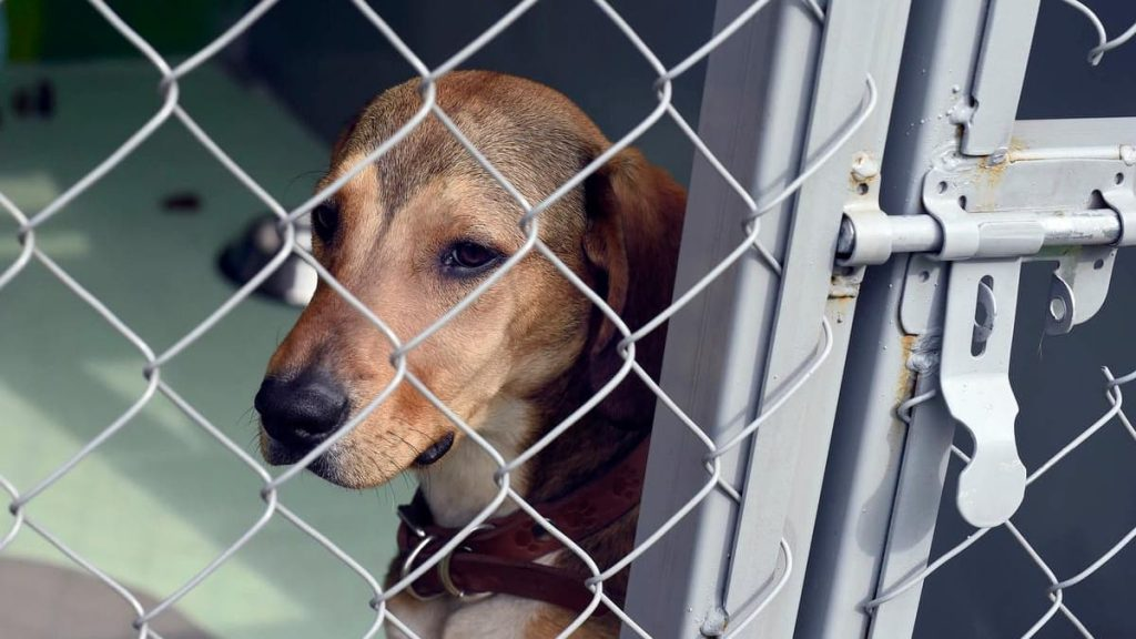 Shelter dogs are slaughtered due to health restrictions