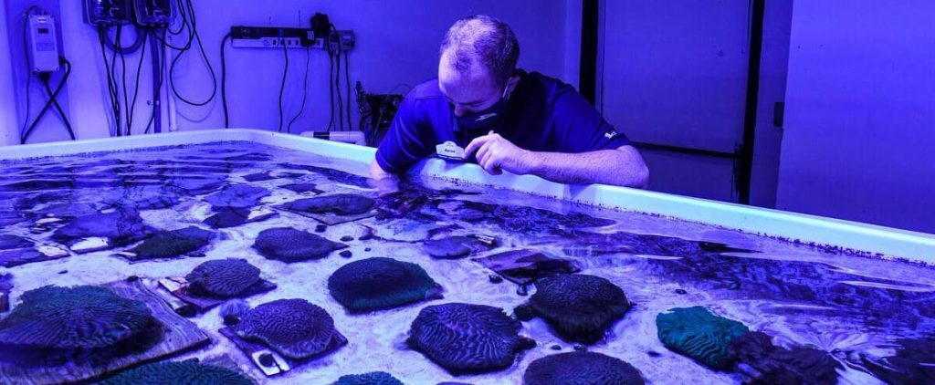 Florida lab tries to save coral reefs from a mysterious disease
